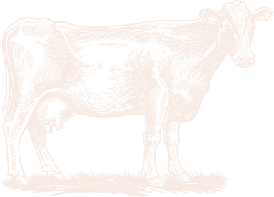 Etching of a cow.